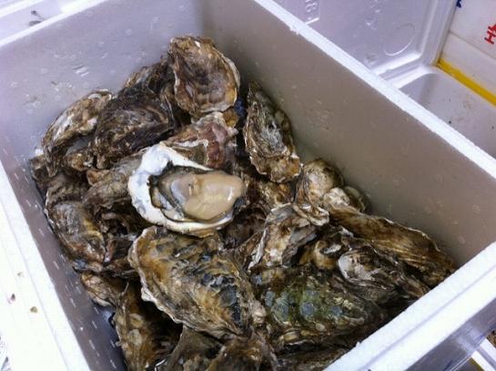 ぷりっぷりの牡蠣(^'^)はあ…白ワインと一緒に食べたい。