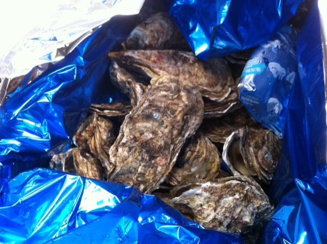 ミトラの牡蠣は仕入れ段階で厳選してます!!岩牡蠣・真牡蠣の良い見分け 方が大事